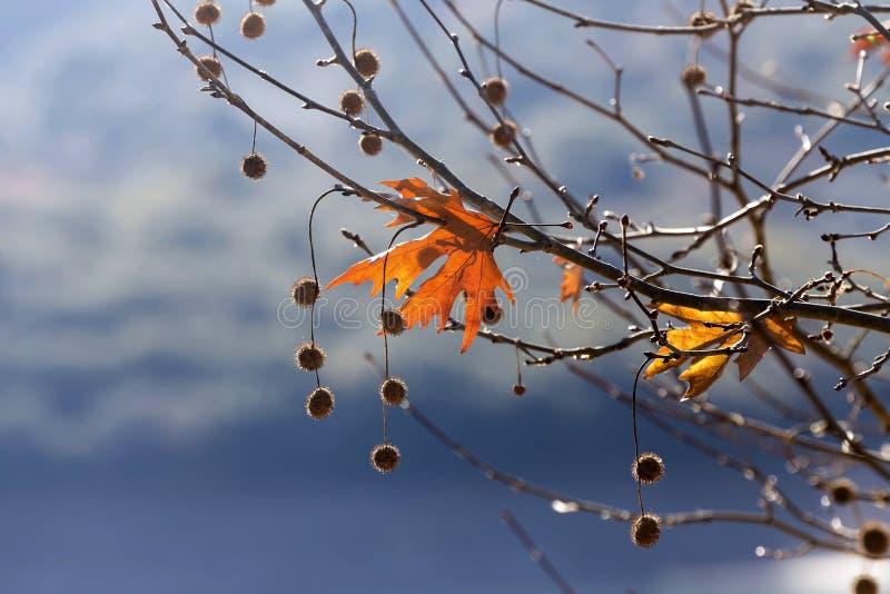 Las hojas del árbol plano imagen de archivo libre de regalías
