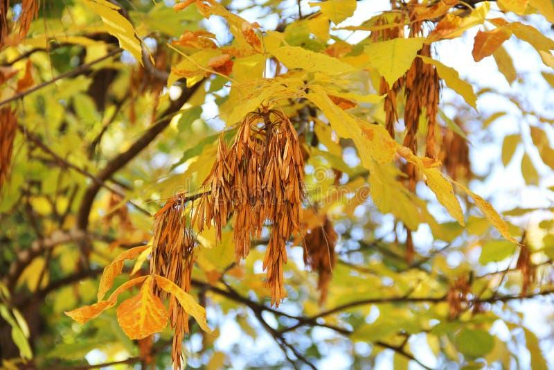 Las hojas del árbol se cierran para arriba Otoño foto de archivo libre de regalías