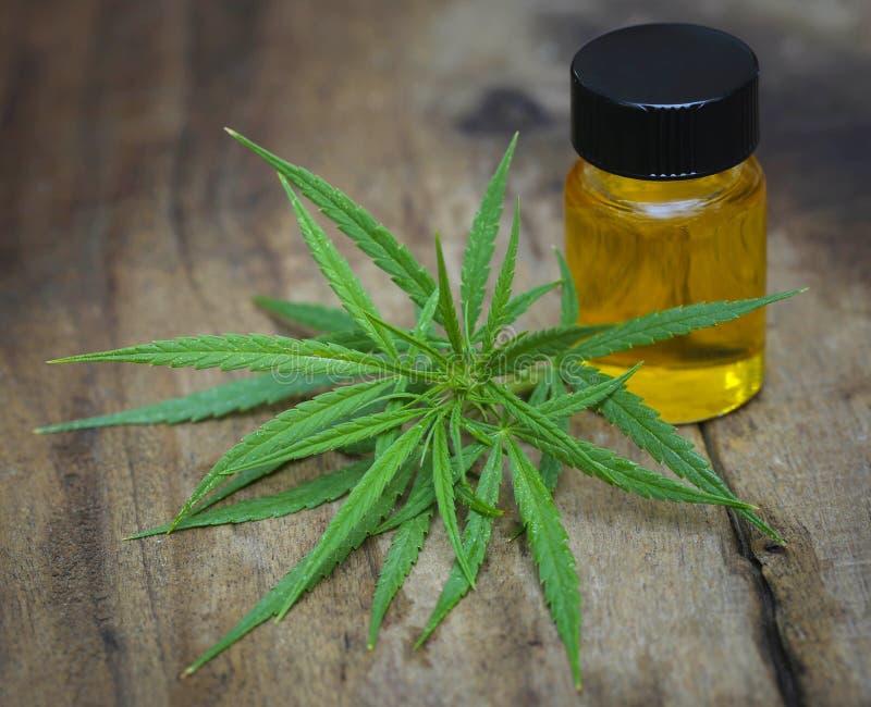 Las hojas del verde de cáñamos medicinales con el extracto engrasan imagen de archivo libre de regalías