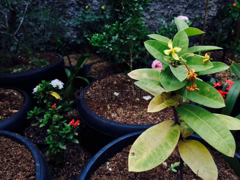 Las hojas del verde están floreciendo en luz del día fotografía de archivo