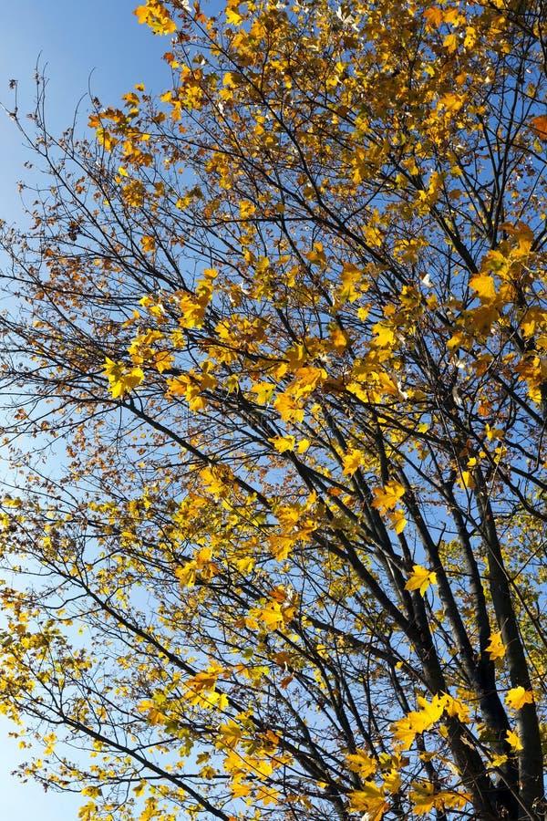Las hojas en los árboles imagenes de archivo