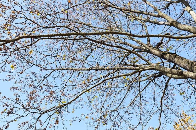 Las hojas en los árboles fotografía de archivo libre de regalías