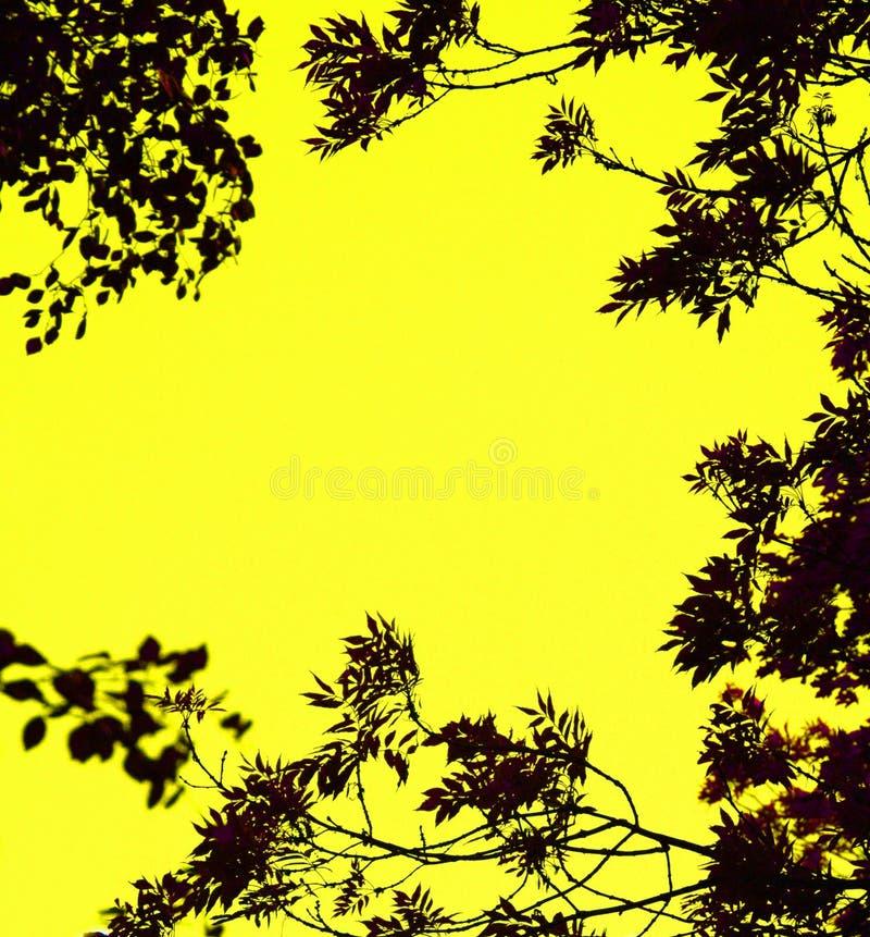 Las hojas enmarcaron el fondo fotos de archivo