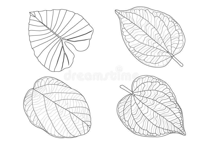 Las hojas esqueléticas alinean diseño fotografía de archivo libre de regalías
