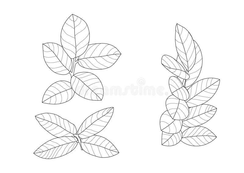 Las hojas esquel?ticas alinearon dise?o en el vector blanco del ejemplo del fondo stock de ilustración
