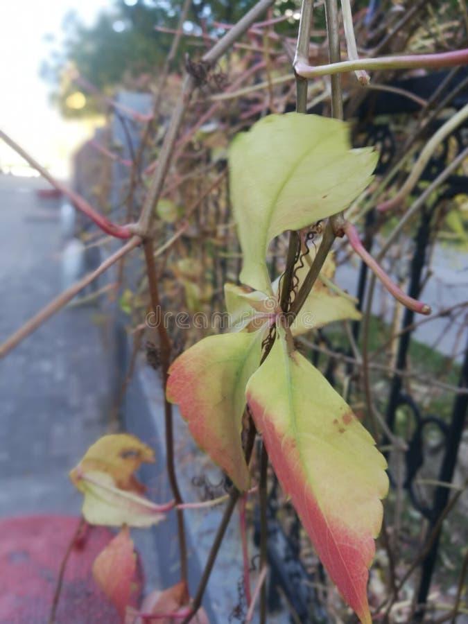 Las hojas marchitadas y marchitadas, y el viento del otoño es fuertes imagenes de archivo