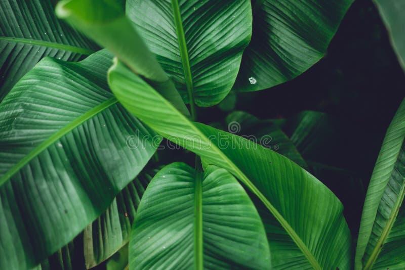 Las hojas ponen verde el detalle oscuro de la hoja en el bosque natural fotos de archivo libres de regalías
