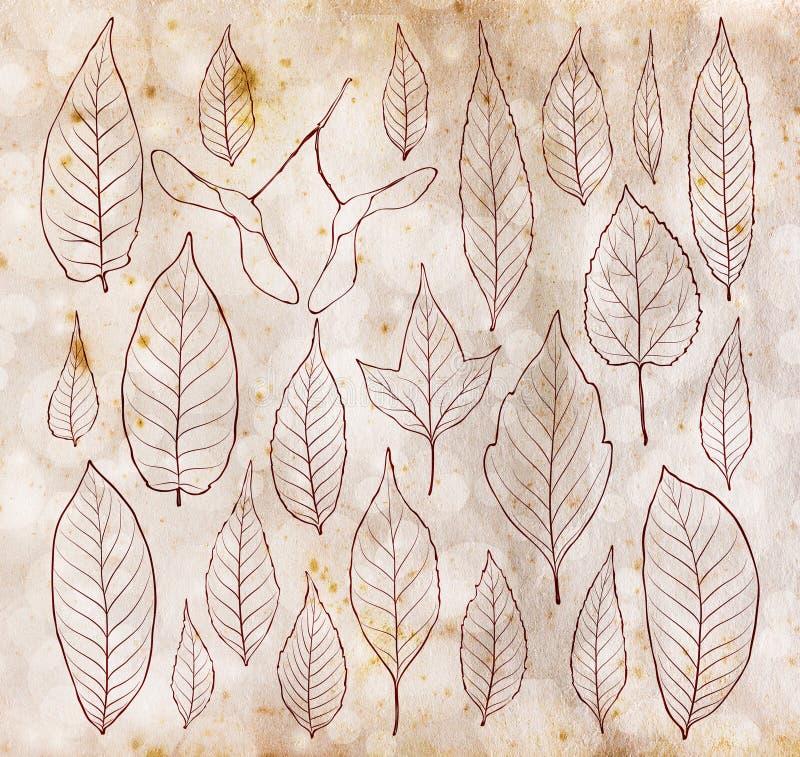 Las hojas resumen el sistema en viejo fondo de papel del vintage imagen de archivo