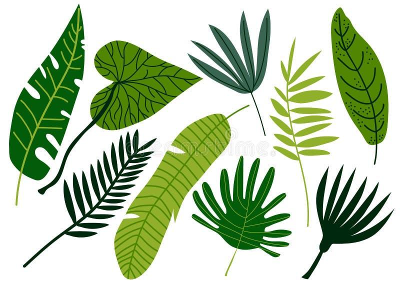Las hojas tropicales fijaron, palmera exótica del verde de la selva dejan el ejemplo del vector ilustración del vector