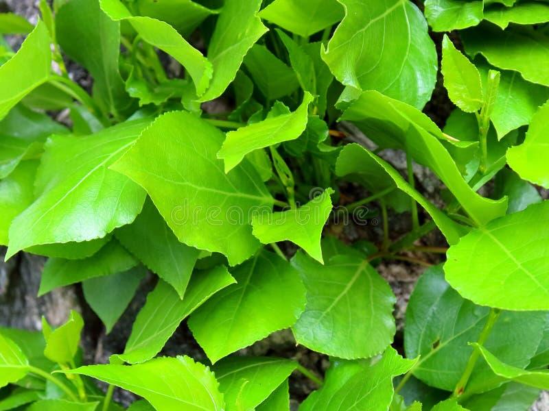 Las hojas verdes se cierran para arriba en un árbol fotos de archivo