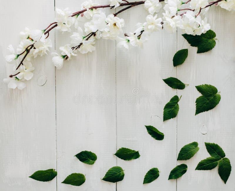 Las hojas y Sakura del verde ramifican en el escritorio de madera blanco en fondo Endecha plana, visión superior foto de archivo libre de regalías