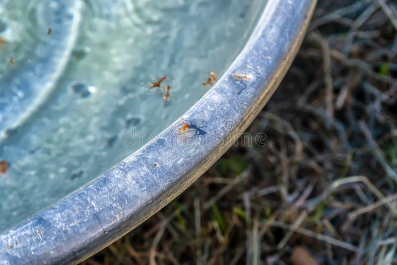 Las hormigas caminan al borde de la tina foto de archivo libre de regalías