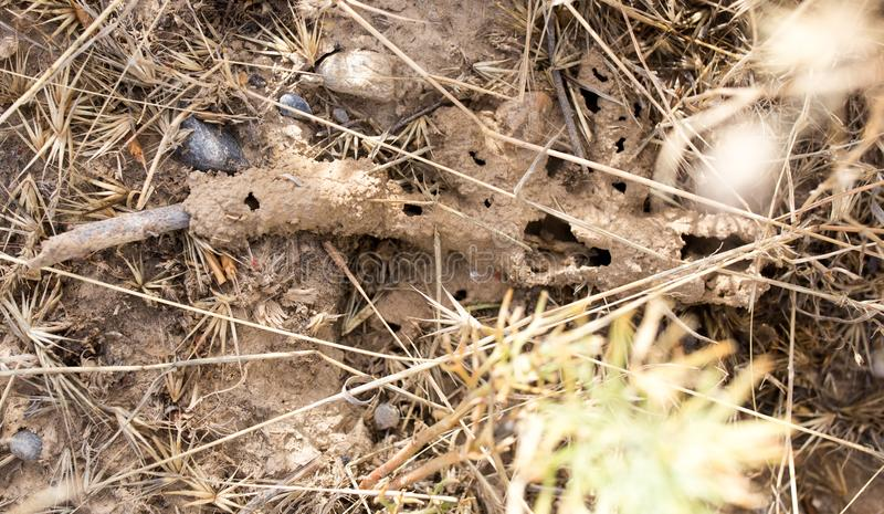Las hormigas contienen en la tierra imágenes de archivo libres de regalías