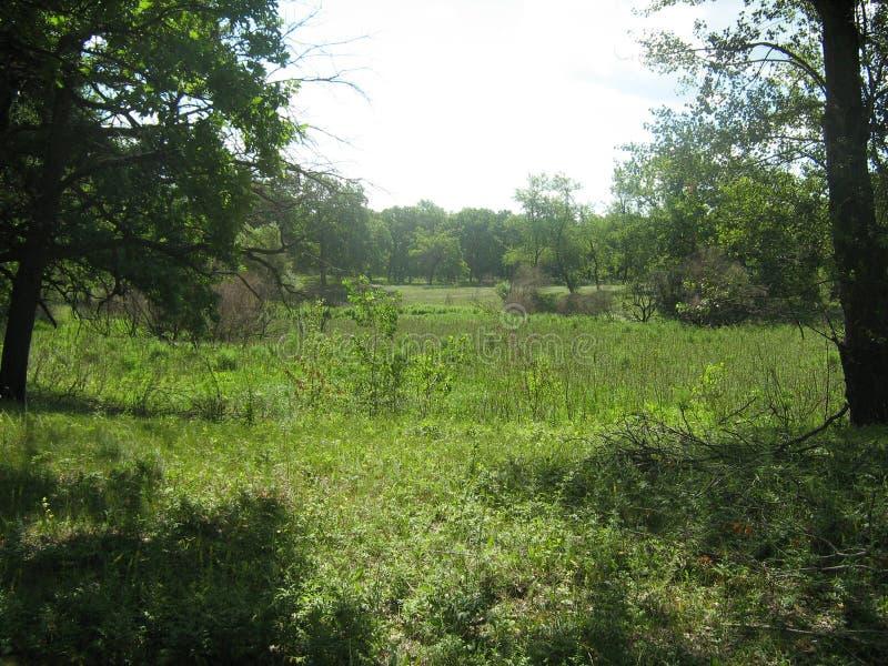 Las i łąki jesteśmy typowym krajobrazem środkowa część Rosja zdjęcia stock
