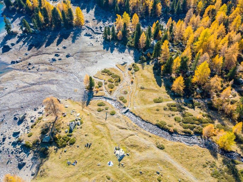 Las i bagna w złotym sezonie jesiennym w Lagh da Val altówce fotografia stock