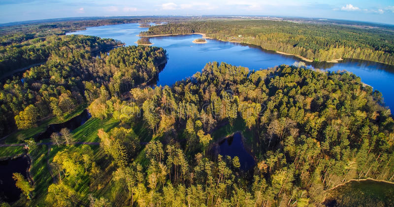 Las i jezioro od ptaka widoku fotografia royalty free