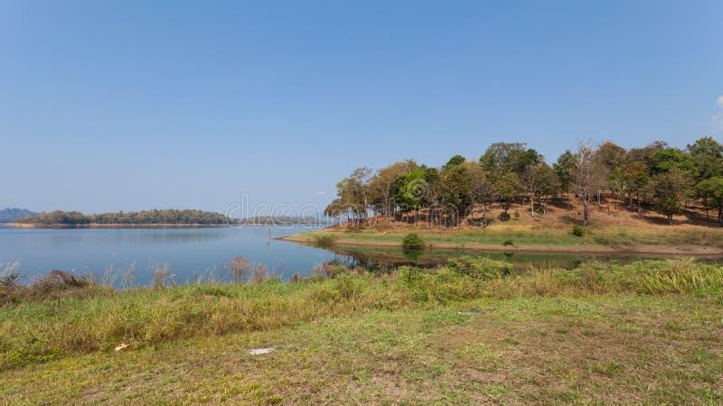 Las i jezioro pod niebieskim niebem obraz royalty free