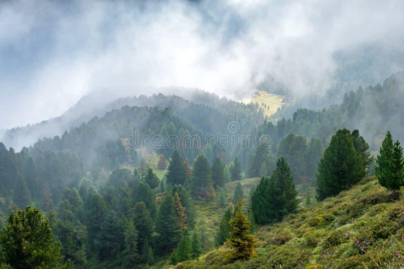 Las i paśniki na skłonach wysokogórskie góry zdjęcie stock
