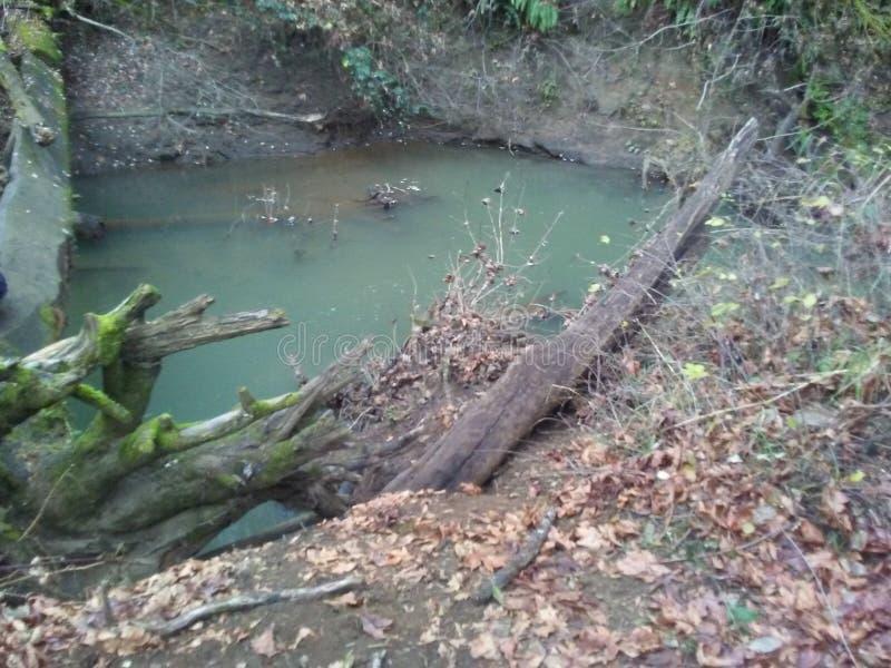 Las i rzeka zdjęcie royalty free