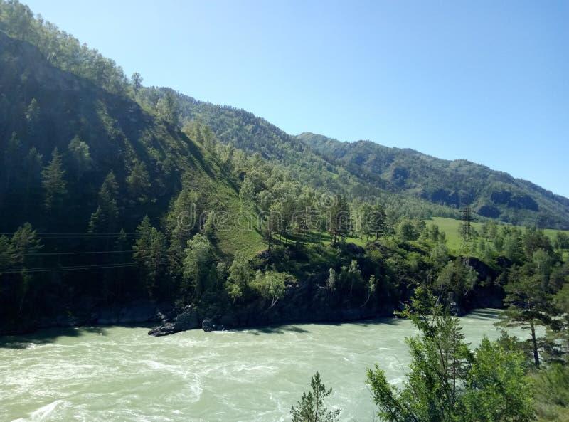 Las i rzeka w Altai górach, federacja rosyjska, Altai obraz royalty free