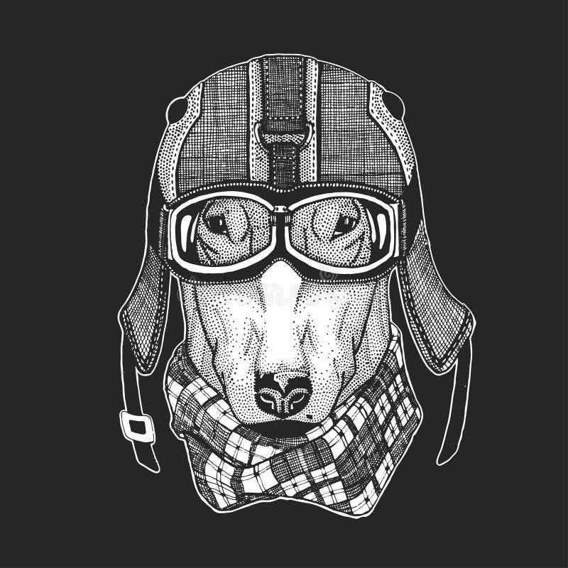 Las imágenes del vector del vintage de los perros para la camiseta diseñan para la motocicleta, bici, moto, club de la vespa, aer ilustración del vector