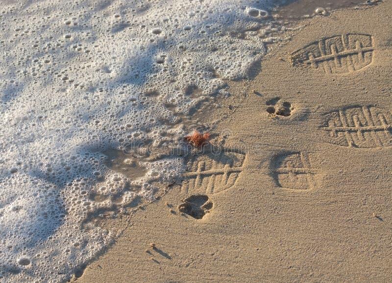 Las impresiones de la pata y las impresiones del zapato en las aguas afilan fotos de archivo libres de regalías