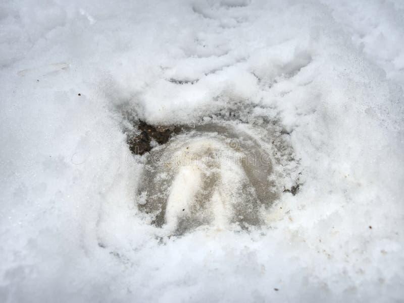 Las impresiones de la pierna del caballo en campo del invierno corren libremente imagen de archivo libre de regalías