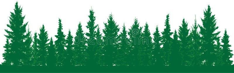 Las jedlinowych drzew sylwetka Parkowa aleja wiecznozielony drewno Iglasta świerczyna ilustracja wektor