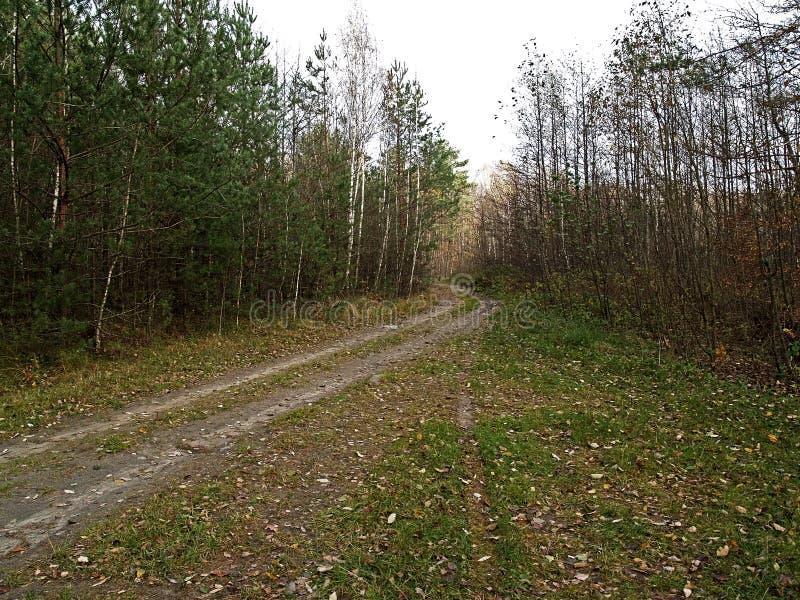 Download Las jesieni zdjęcie stock. Obraz złożonej z liść, natura - 53787544
