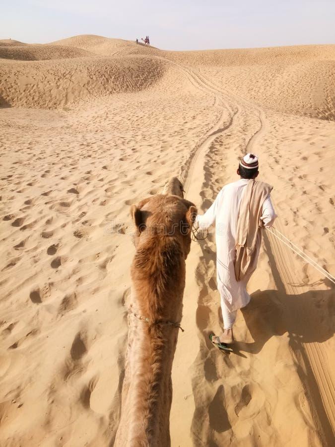 Las jest tajemnicą ale pustynia jest rzeczywistością! zdjęcia royalty free
