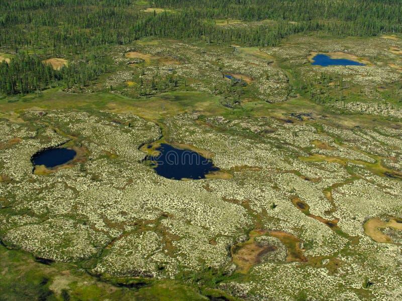 las krajobrazowa tundra fotografia stock