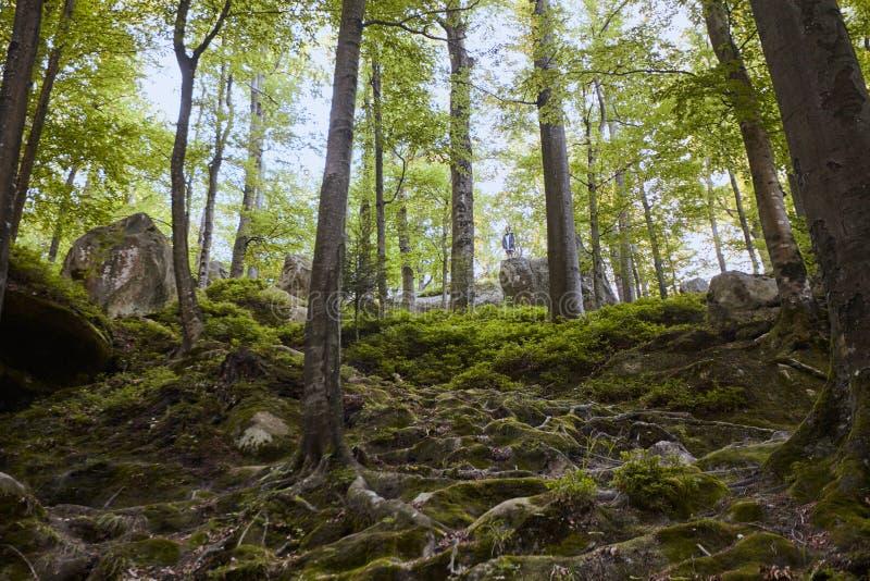 Las krajobrazowej bajki bukowy las i ogromni kamienie obrazy royalty free