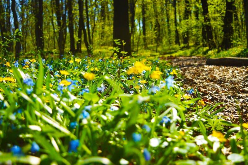 las kwitnie na pogodnym wiosna dniu obrazy stock