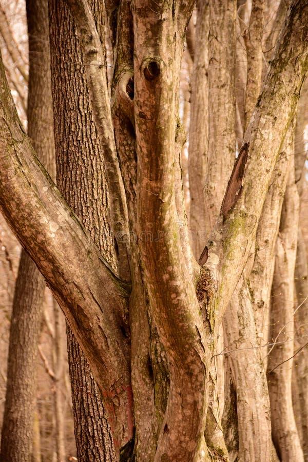 Las líneas torcidas de los árboles crecientes imágenes de archivo libres de regalías