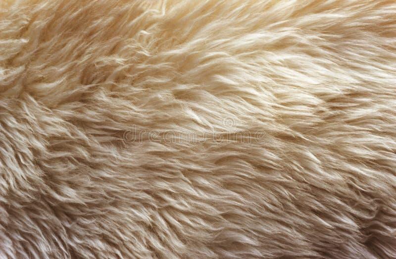 Las lanas suaves blancas texturizan el fondo, algodón inconsútil, lana natural de las ovejas de la luz, textura de la piel mullid foto de archivo