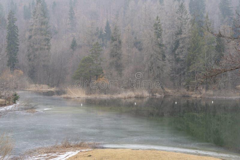 Las leśny w trentyńskim sezonie zimowym fotografia stock