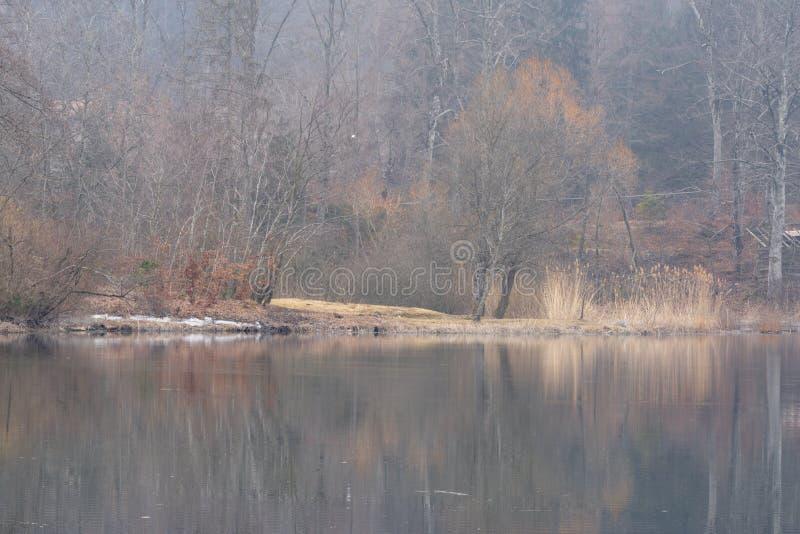 Las leśny w trentyńskim sezonie zimowym obrazy stock