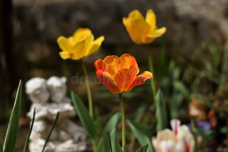 Las letras del ` de tulipanes rojos del ` casero y anaranjados amarillos hermosos en un zen cultivan un huerto con la estatua rom fotografía de archivo
