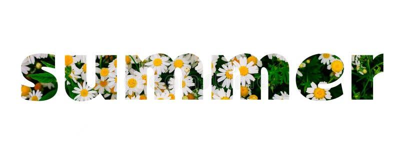 Las letras del verano hicieron de campo de flores de la margarita imagen de archivo libre de regalías