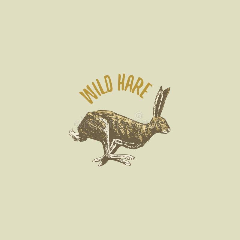 Las liebres o el conejo salvajes grabaron la mano dibujada en viejo estilo del bosquejo, animales del vintage logotipo o emblemas ilustración del vector