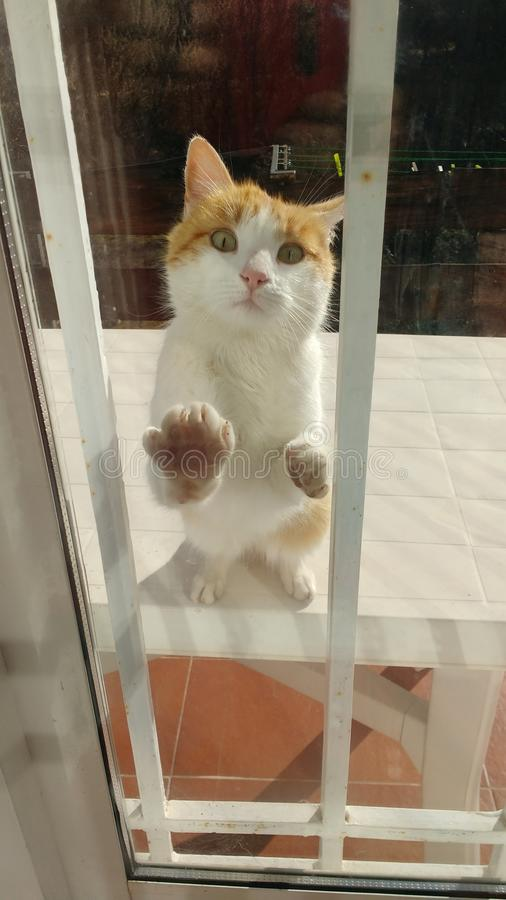 Las llamadas del gato a la ventana fotos de archivo