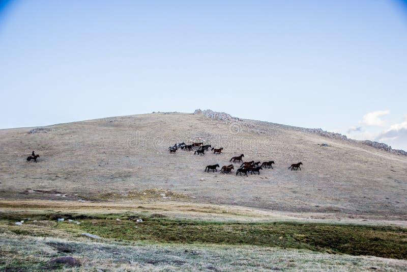 Las manadas acercan a la canción Kol imagen de archivo