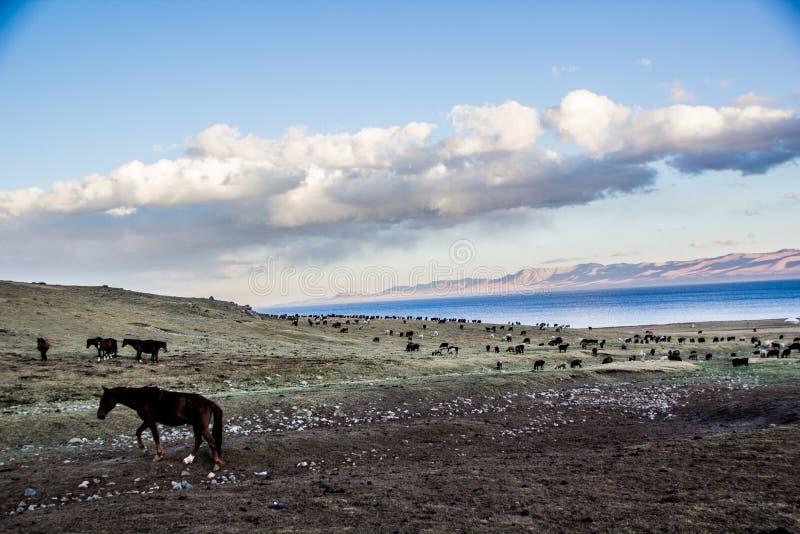 Las manadas acercan a la canción Kol fotografía de archivo