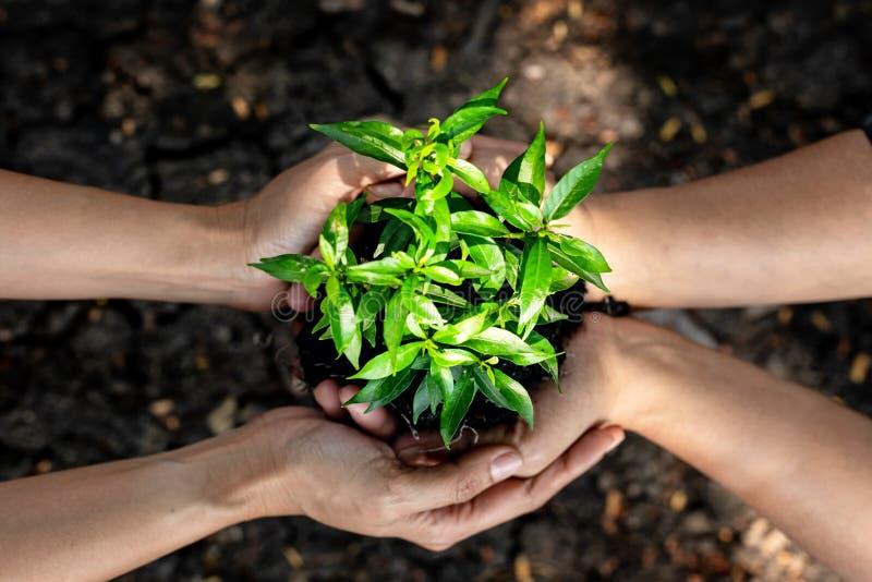 Las manos combinan el trabajo y a la familia que sostienen las plántulas en el suelo árido y el suelo agrietado del tierra o muer imágenes de archivo libres de regalías