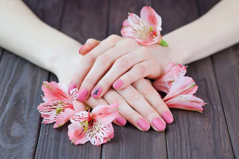 Las manos con color rosado clavan la manicura foto de archivo
