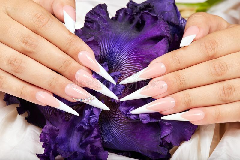 Las manos con el francés artificial largo manicured clavos y una flor púrpura del iris foto de archivo