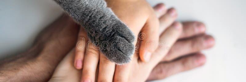 Las manos de la familia y de la pata peluda del gato en equipo Luchando para los derechos de los animales, BANDERA de ayuda de lo fotos de archivo