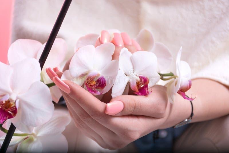 Las manos de la muchacha con la manicura rosada de la primavera en los clavos que sostienen las orquídeas blancas florecen en est foto de archivo
