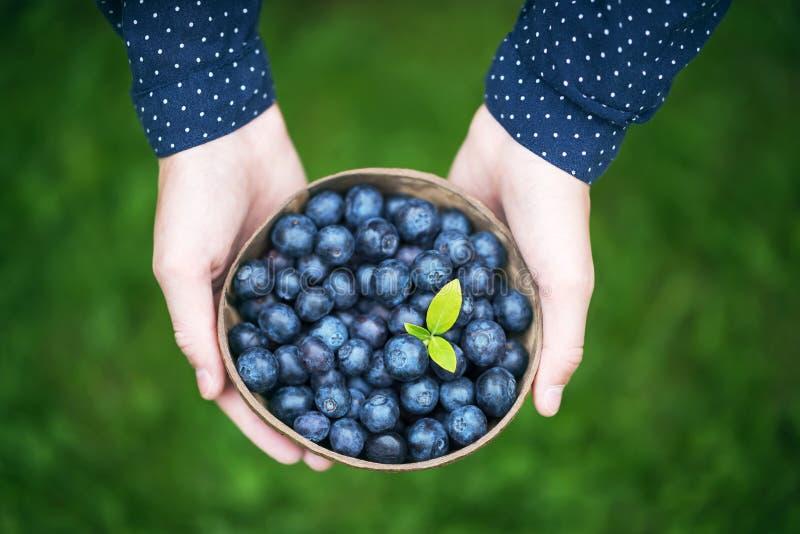 Las manos de la muchacha con un cuenco de arándanos orgánicos recién cosechados foto de archivo