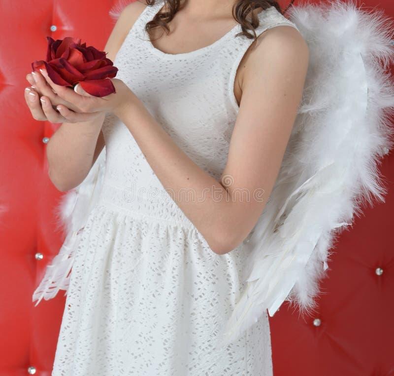 Las manos de la muchacha que sostienen una rosa roja en un vestido blanco con las alas del ángel en un fondo rojo fotografía de archivo libre de regalías